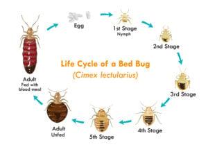 Orlando Florida Bed Bug Injury Claims