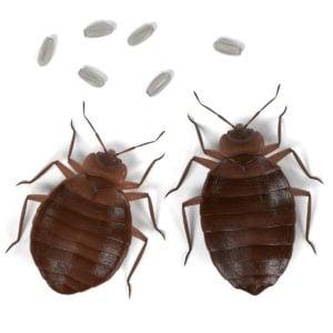 Orlando Hotel Bed Bug Injury Case Settles